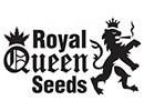 Royal Qeen Seeds