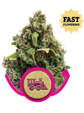 Candy Kush Express (Fast Version)